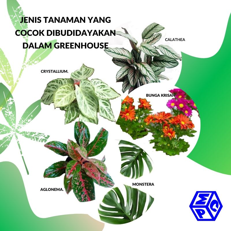 Tanaman Hias Yang Cocok Dibudidayakan Dalam Greenhouse Apa Saja