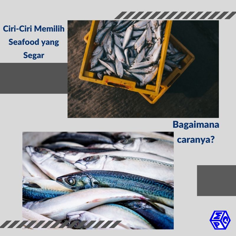 ciri-ciri seafood