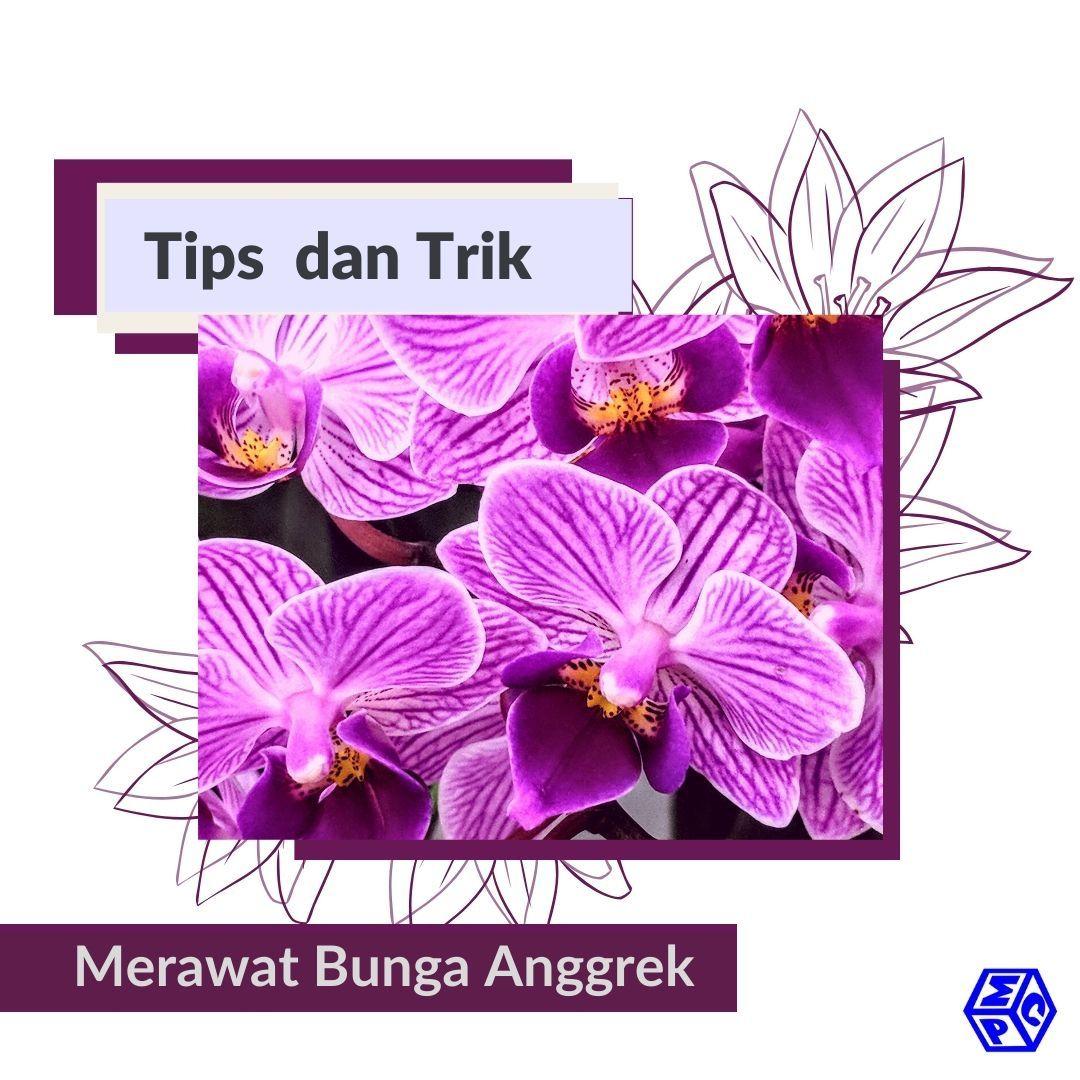 Tips Merawat Anggrek Yang Tepat Pt Mutiaracahaya Plastindo