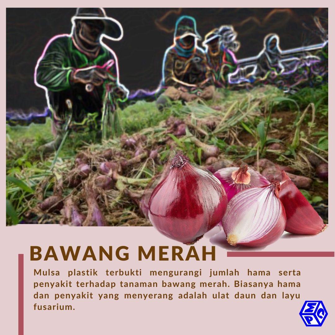 Bertanam Bawang Merah Di Dalam Pot Apa Tipsnya Pt Mutiaracahaya Plastindo